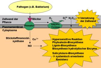 Immunabwehr der Pflanzenx