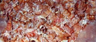 Krabbenschalen